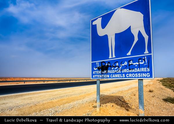 Northern Africa - Tunisia - Chott el Djerid - Large endorheic desert salt lake in southern Tunisia near towns of Kebili and Douz