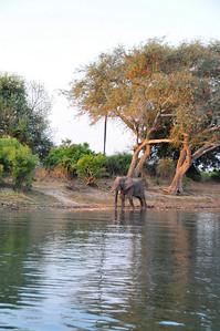 _D038817 Evening Bath at the Zambezi River