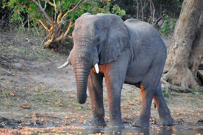 _D038823 On the Zambezi