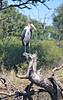 Malibu stork.