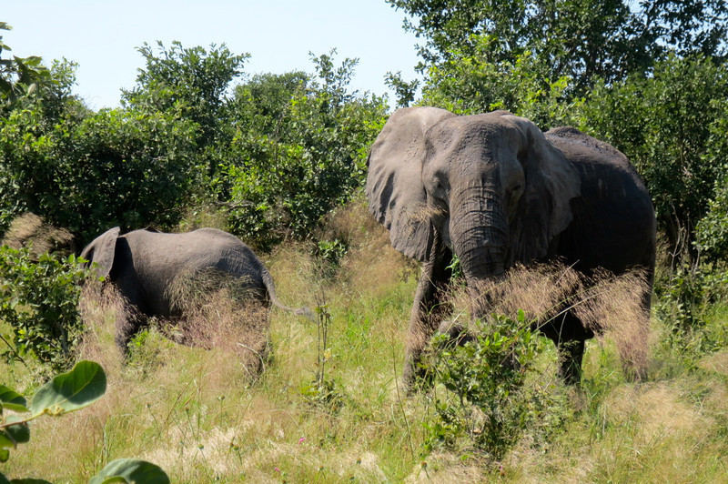 This region of Botswana boasts one of the largest elephant populations in the world.