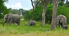 First of many sightings of elephants on the way to Camp.