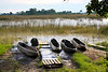 Mekoro, dugout canoes, waiting for our evening ride.