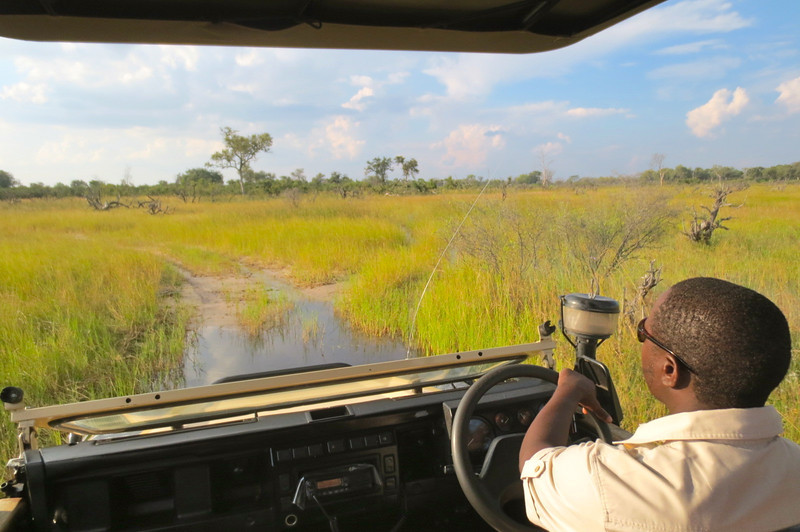 First afternoon to evening game drive with Luke driving through the delta's waters.
