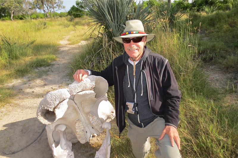 An elephant's skull.