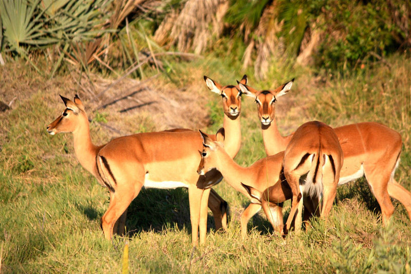 """The white strips on their behinds are """"follow me"""" markings for the young…common among many animals."""