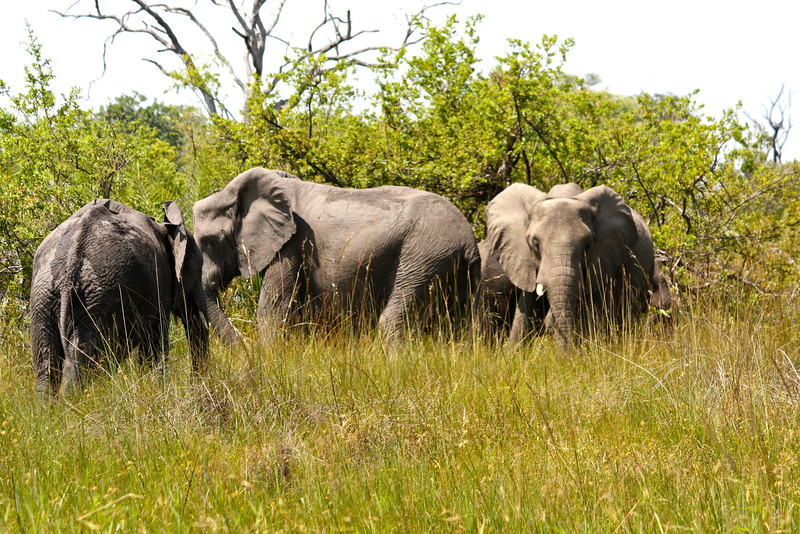 But, first, we were welcomed by a small herd of elephant.