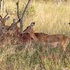 The Hide Hwange National Park, Zimbabwe, 2015