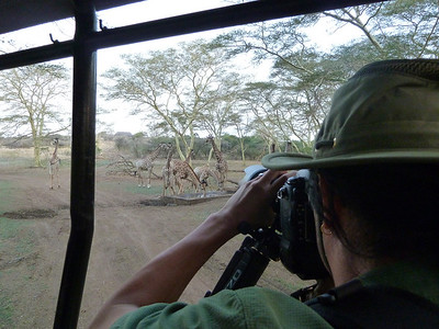 Capturing giraffe