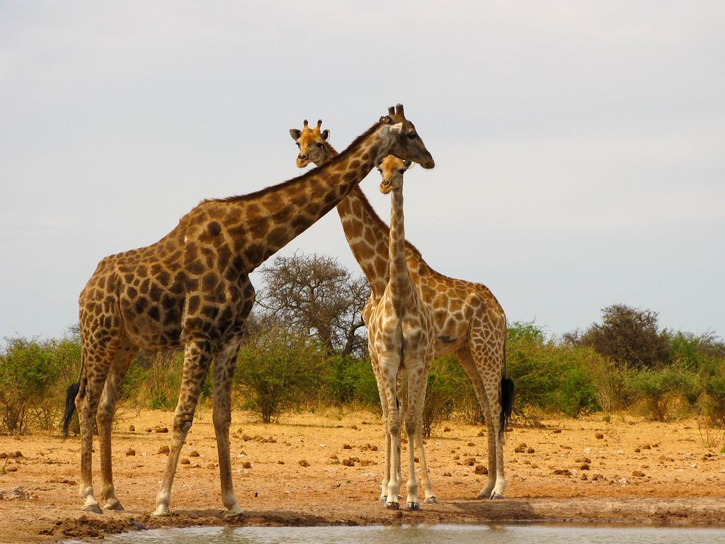 Tsumcor Waterhole, Etosha National Park
