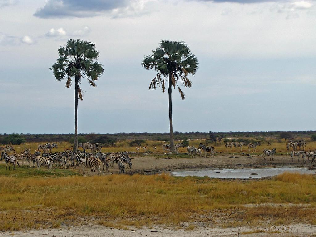 Twee Palms, Etosha National Park