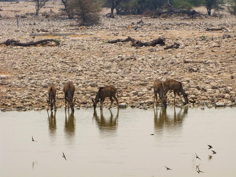 Okaukuejo Waterhole, Etosha National Park