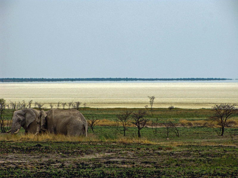 Elephants, Etosha National Park