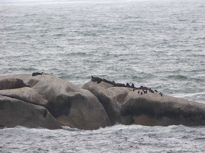 Heading down the Cape of Good Hope, we encountered these cape fur seals on rocks about 100m off shore at Cosy Bay.