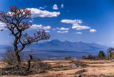 Tree and Mt. Kadam