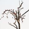 Bee-eater Tree