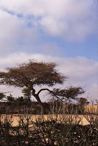 morning in Senegal;