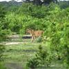 ChobeChilwero022