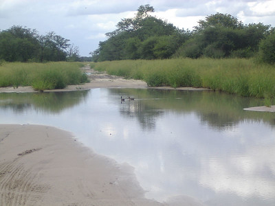 So much rain, the ducks were swimming on the road, this was actually the condition of most of the roads we took in Botswana, thank goodness for 4x4.