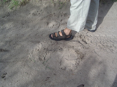 Caleb's foot beside an elephant foot print, He had gone through the camp in the morning.