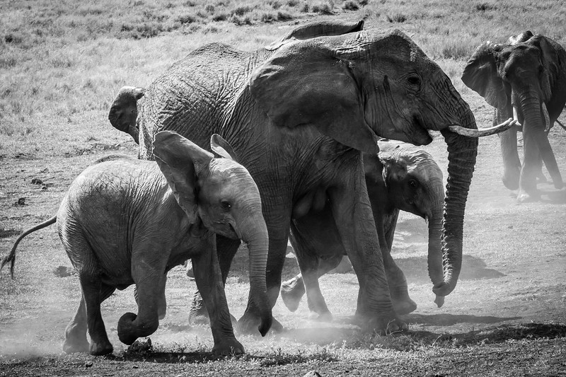 Running for the Watering Hole