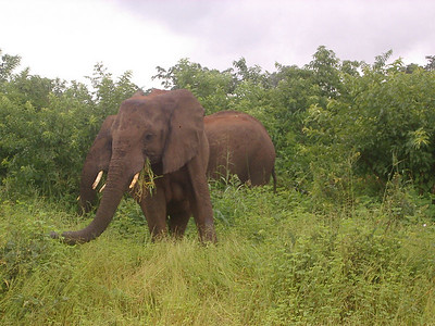 Elephants along the side of the road.