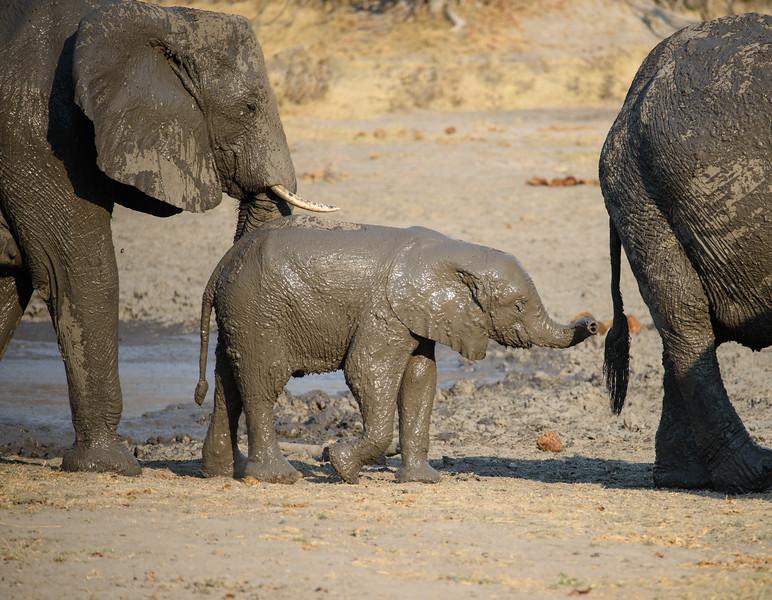 Muddy Elephants