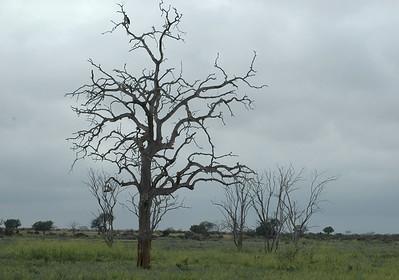 """Kanderi Swamp, Tsavo East"""