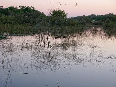 Okavanga dawn