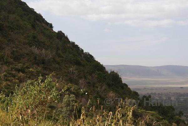 The ascent up Ngorongoro Crater