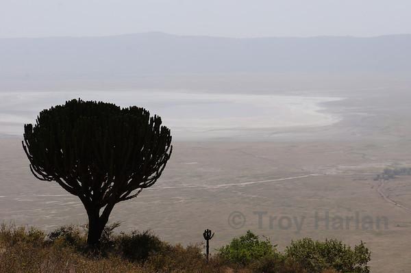 Descending into Ngorongoro Crater