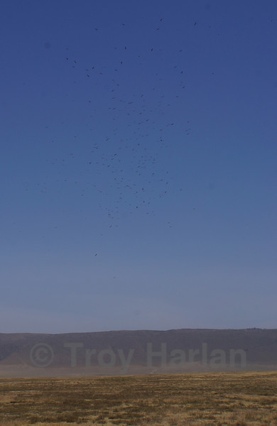 Storks circling in a funnel shape above Ngorongoro Crater