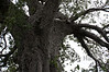 Many stories of this particular Baobab tree from Ben, our Tanzania guide