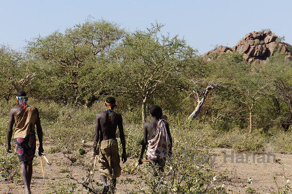 Return from hunting with the Hadzabe bushmen