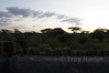 "View from ""Tent"" at Ndutu"