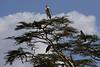 "Marabou Storks<br /> <br />  <a href=""http://en.wikipedia.org/wiki/Marabou_Stork"">http://en.wikipedia.org/wiki/Marabou_Stork</a>"