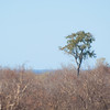 "<span id=""title"">Lone Tree</span> <em>Kruger National Park</em> This tree escaped the controlled burn that had recently been done."