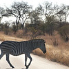"<span id=""title"">Zebra</span> <em>Kruger National Park</em> Zebra crossing the road."