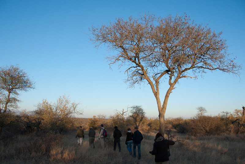 "<span id=""title"">Bush Walk</span> <em>Balule Game Reserve, Bush Walk</em> My wife and I shared the walk with a nice Belgian family and the two guides - one in front with a gun, one in back. We learned later that the gun is pretty much just for show."