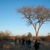 """<span id=""""title"""">Bush Walk</span> <em>Balule Game Reserve, Bush Walk</em> My wife and I shared the walk with a nice Belgian family and the two guides - one in front with a gun, one in back. We learned later that the gun is pretty much just for show."""