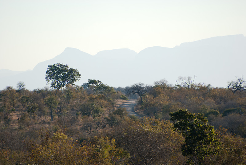 "<span id=""title"">Distant Road</span> <em>Kruger National Park</em> A typical view of a road in the park."