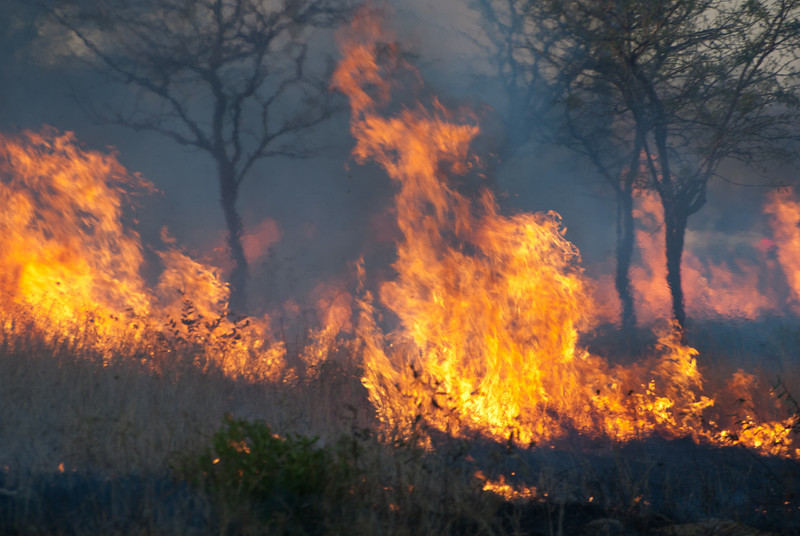 """<span id=""""title"""">Burning Bush</span> <em>Kruger National Park</em> This was a controlled burn near the Orpen gate entrance. We saw a lot of past burns throughout the park, so it was interesting to see one in progress."""