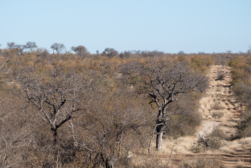 """<span id=""""title"""">This is a Road?</span> <em>Balule Game Reserve</em> Kruger National Park has paved roads and nice dirt roads. This is the typical road in the private game reserve. This is why safaris use land cruisers and land rovers - anything else would be sorely inadequate."""