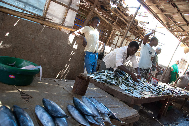 "<span id=""title"">Fish Market</span> And still more fish at the Banguia market."
