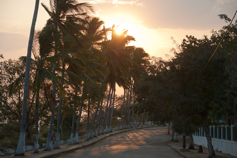 """<span id=""""title"""">Palm-lined Street</span> I'm not terribly happy with how this photo turned out, but there was something almost surreal about this road. It had a nice view, was lined with palm tree and the light was beautiful as the sun started going down. And yet, there were hardly any people around..."""