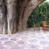 """<span id=""""title"""">Pieter's Place</span> Here you can get a sense of how the tree really dominates the architecture."""