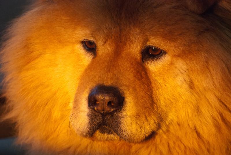 """<span id=""""title"""">Sunset Dog</span> <em>Pretoria</em> Our guest house owner's dog."""