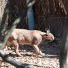 "<span id=""title"">Caracal</span> <em>Ann van Dyk Cheetah Centre</em> This tuft-eared cat has amazing jumping abilities. We did not get to see it in action :("