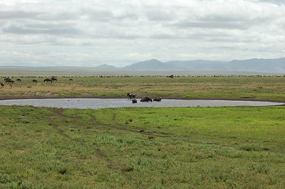 Ndutu plains