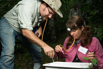 Andy Suarez (University of Illinois) and Corrie Moreau (Field Museum) use aspirators to collect ants from a leaf litter sample. Ant Course 2012, Uganda.
